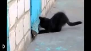 Смотреть онлайн Котенок спас друга-щенка