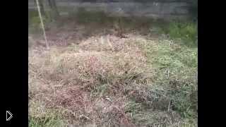 Смотреть онлайн Сажаем картошку под сено и траву