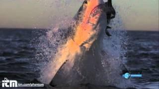 Смотреть онлайн Нападение акул в замедленной съемке