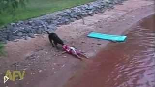 Смотреть онлайн Надрессировали собаку вытаскивать ребенка из воды