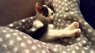 Смотреть онлайн Непослушный хвост раздражает котенка