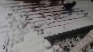 Смотреть онлайн Собака впервые увидела снег
