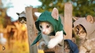 Смотреть онлайн Приключения котят - ассасинов