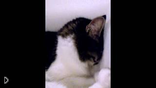 Маленькая кошечка обиделась на хозяина - Видео онлайн