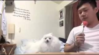 Смотреть онлайн Явно голодная собака не дает поесть хозяину
