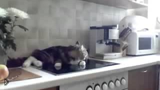 Смотреть онлайн Кот отвечает своей хозяйке