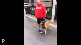 Смотреть онлайн Смотреть всем: Блестяще дрессированная собака