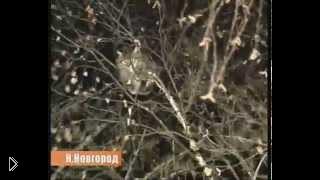 Смотреть онлайн Солдат по странному спас кота в Нижнем Новгороде