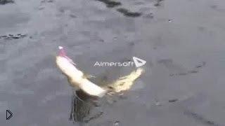 Смотреть онлайн Осенняя рыбалка: ловим щуку на спиннинг