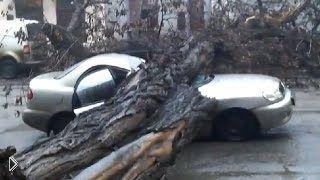 Смотреть онлайн Подборка: Деревья падают на автомобили