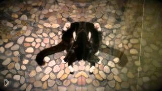 Смотреть онлайн Забавные игры с отражением кота
