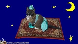 Костюм принцессы Жасмин для кошки на хэллоуин - Видео онлайн