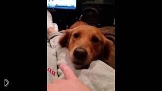 Смотреть онлайн Собака поет странные песни