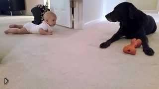 Смотреть онлайн Первое знакомство девочки с собакой