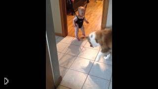 Смотреть онлайн Огромный пес учит правильно прыгать малыша