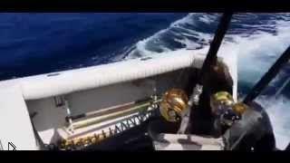 Смотреть онлайн Морской лев прыгнул в яхту для получения лакомства
