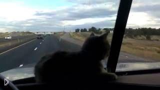 Кошка в машине испугалась моста - Видео онлайн