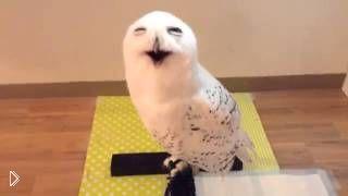 Смотреть онлайн Сова довольно улыбается на камеру