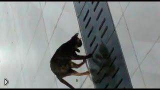 Смотреть онлайн Умелый кот идеально поймал мышку из канализации