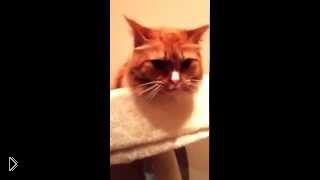 Смотреть онлайн Кот странно реагирует на звук отрывающего скотча