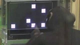 Обезьяна имеет феноменальную способность - Видео онлайн