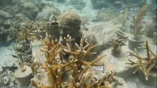 Смотреть онлайн Музей подводных скульптур в Мексике, Канкун