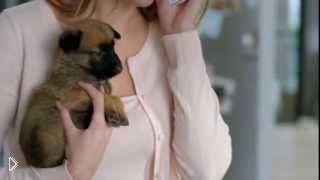 Смотреть онлайн Трудности воспитания детей от пса по имени Кито