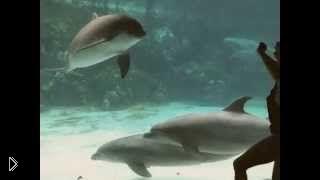Смотреть онлайн Девушка-акробатка заставила смеяться дельфина