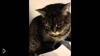 Смотреть онлайн Кот сильно увлечен листом бумаги