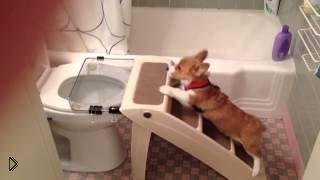 Щенок мочится прямо в унитаз через металлическую сетку - Видео онлайн