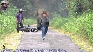 Смотреть онлайн Свирепый слон погнался за двумя мужчинами