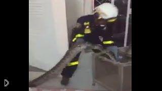 Смотреть онлайн Спасатели вытащили огромную змею из дома