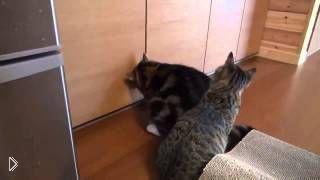 Смотреть онлайн Толстый кот обманул тощего котенка