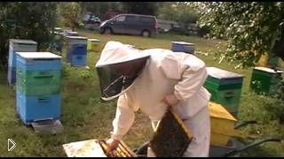 Подготавливаем пчел к зиме - Видео онлайн