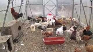 Смотреть онлайн Создание условий для кур в зимний период