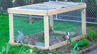 Смотреть онлайн Летняя клетка для кроликов: быстро и своими руками