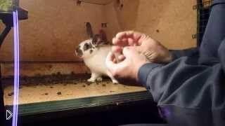 Смотреть онлайн Беременность самки кролика: как определить