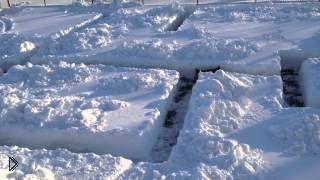 Смотреть онлайн Хозяин вырыл лабиринт в снегу специально для собаки