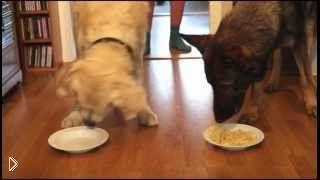 Смотреть онлайн Соревнование по скорости поедания спагетти между собаками