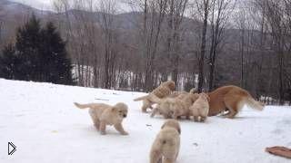 Смотреть онлайн Мама щенят играет со своими детишками