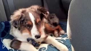 Смотреть онлайн Сон собаки прервала его любимая песня