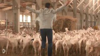 Смотреть онлайн Все об условиях для разведения коз