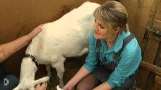 Смотреть онлайн Рассказ фермера о заанинской породе коз