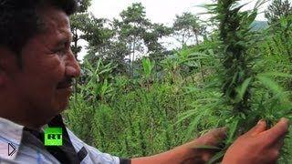 Смотреть онлайн Бедные крестьяне выращивают плантации марихуаны