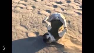 Смотреть онлайн Замедленная съемка падения неуклюжей собаки