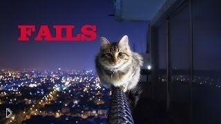 Смотреть онлайн Подборка: Нелепые падения кошек