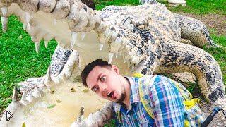 Смотреть онлайн Посещение зоопарка во Вьетнаме. Охота на крокодилов