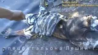Смотреть онлайн Остатки тел убитых батальоном «Айдар»
