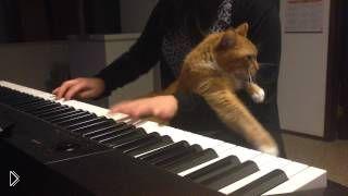 Кот хочет ласки от своей хозяйки - Видео онлайн
