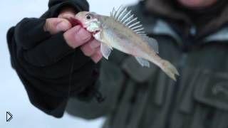 Смотреть онлайн Зимняя рыбалка по первому льду